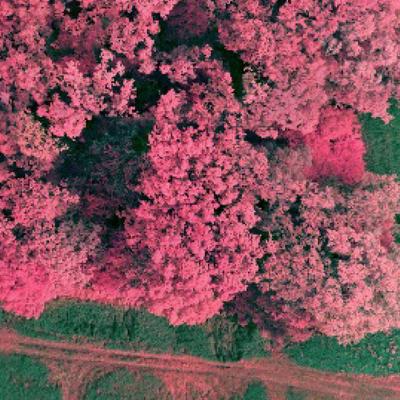 forestry_sensor_variety